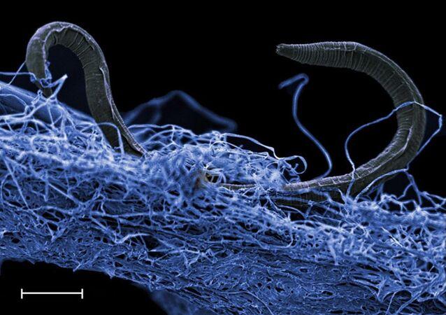 Červi. Ilustrační foto