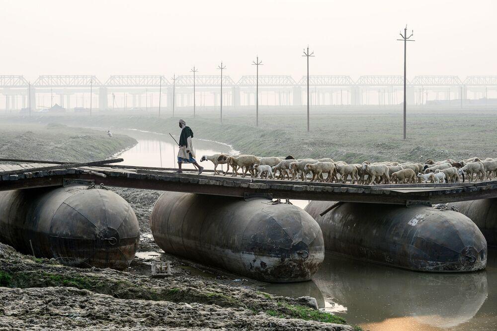 Pastýř se stádem ovcí na pontonovém mostu v Allahabadu, Indie