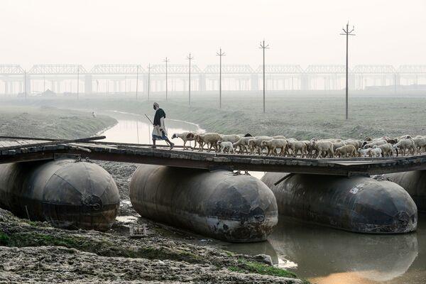 Pastýř se stádem ovcí na pontonovém mostu v Allahabadu, Indie - Sputnik Česká republika