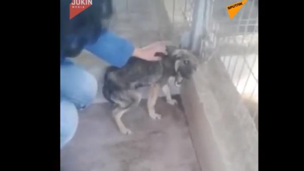 Co s nim lidé udělali? Tento pes vyděšeně kňučel dokonce i při hlazení - Sputnik Česká republika