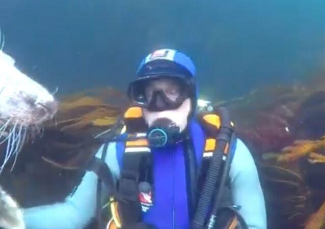 Potápěč a tuleň
