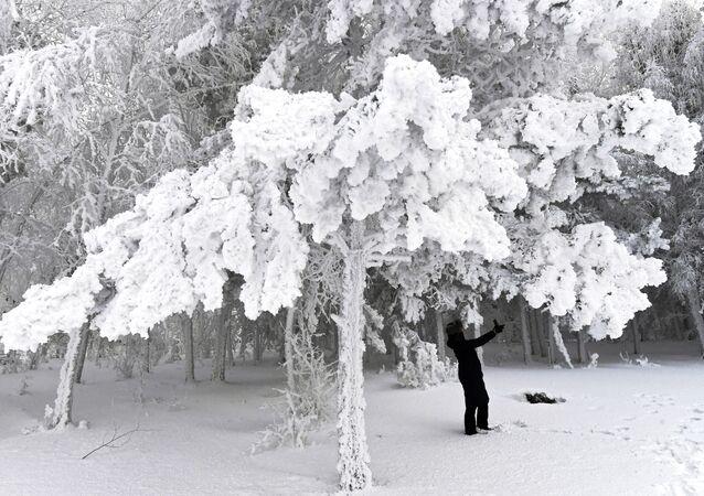 Žena na procházce v zasněženém lese na břehu Jeniseje