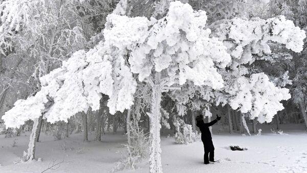 Žena na procházce v zasněženém lese na břehu Jeniseje - Sputnik Česká republika
