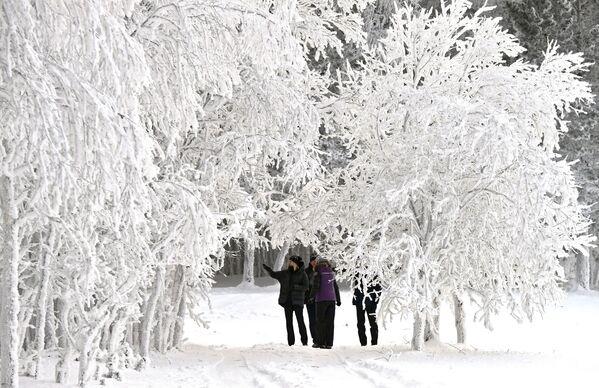 Lidé se procházejí v zasněženém lese na břehu Jeniseje - Sputnik Česká republika