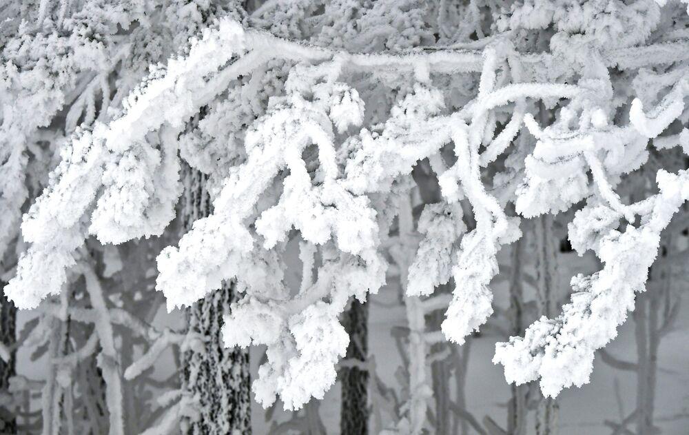 Zasněžený les na břehu Jeniseje