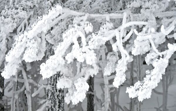Zasněžený les na břehu Jeniseje - Sputnik Česká republika