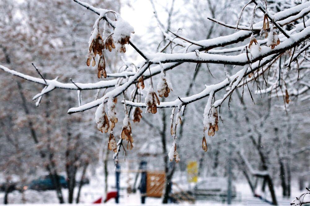 Sníh na větvi stromu
