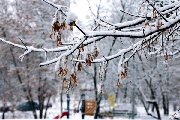 Sníh na větvi stromu - Sputnik Česká republika