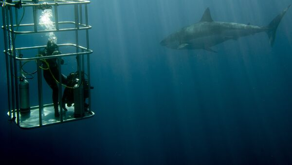 žralok a potápeč  - Sputnik Česká republika