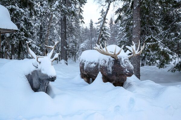 Dřevěné postavy losů v Laponské přírodní biosférické rezervaci v Murmanské oblasti - Sputnik Česká republika