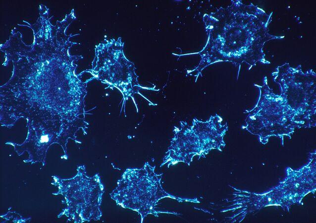 rakovinné buňky
