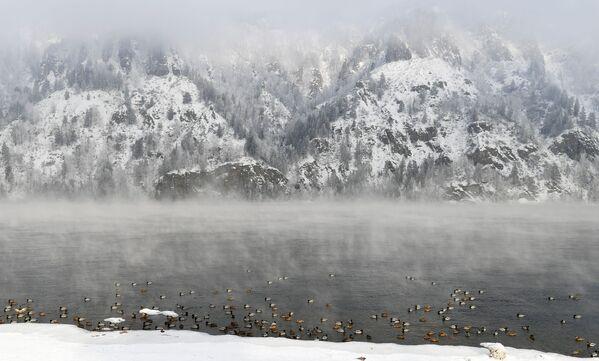 Divoké kachny na řece Jenisej ve městě Divnogorsk v Krasnojarském kraji  - Sputnik Česká republika