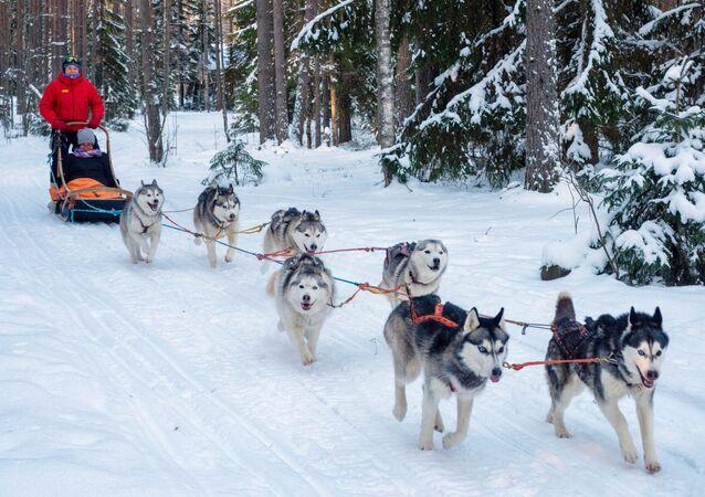 Karelská republika: Exotická destinace pro zimní dovolenou