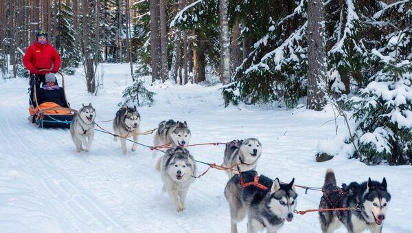 Karelská republika: Exotická destinace pro zimní dovolenou - Sputnik Česká republika