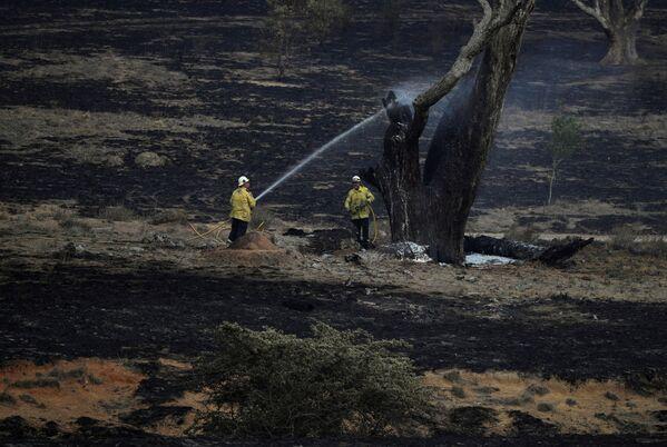 Hasiči hasí tlící strom po požáru u Bumbalongu, Austrálie - Sputnik Česká republika