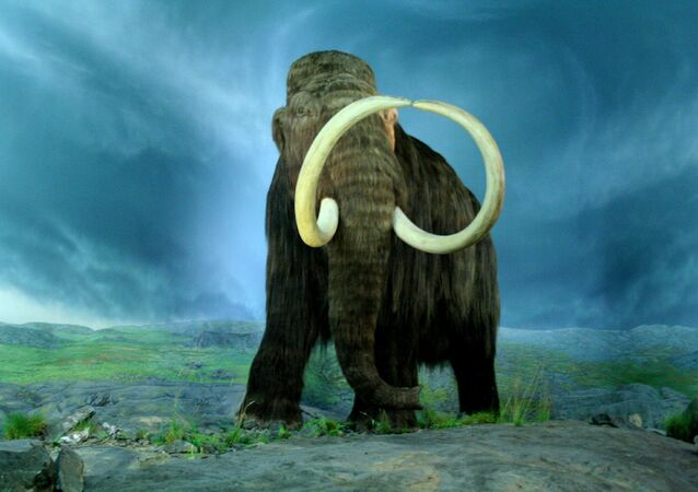 Mamut srstnatý