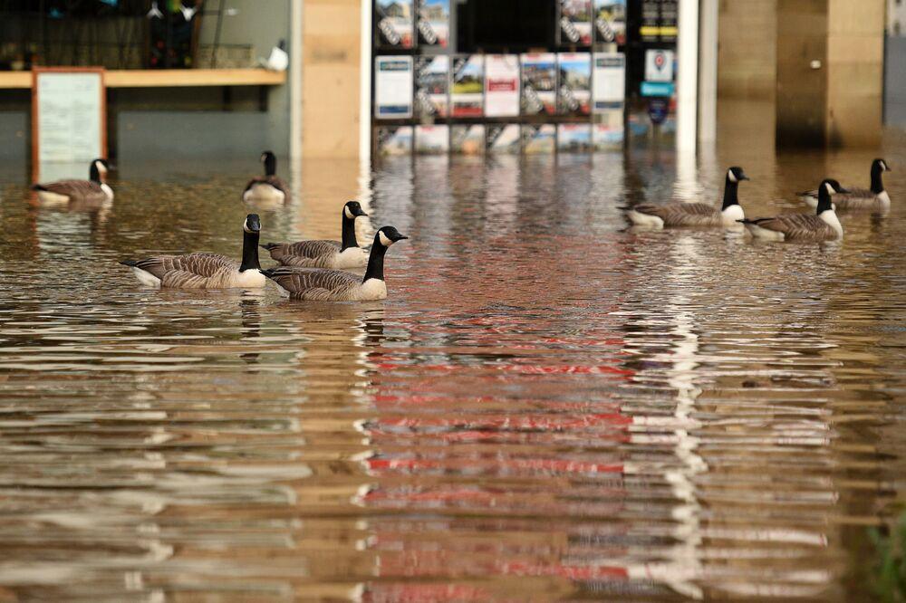 Husy během povodně. Hebden Bridge, Velká Británie.
