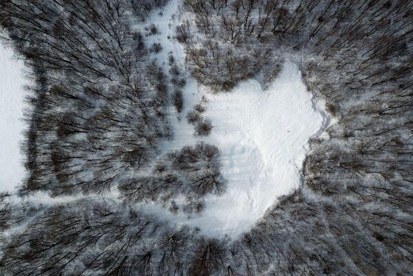 Les v oblasti osady Mezmaj. Krasnodarský kraj, Rusko. - Sputnik Česká republika