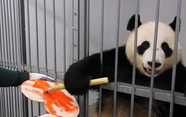 """Žui, samec pandy z moskevské zoo namaloval valentýnku pro svou """"vyvolenou"""", pandu Dindin - Sputnik Česká republika"""