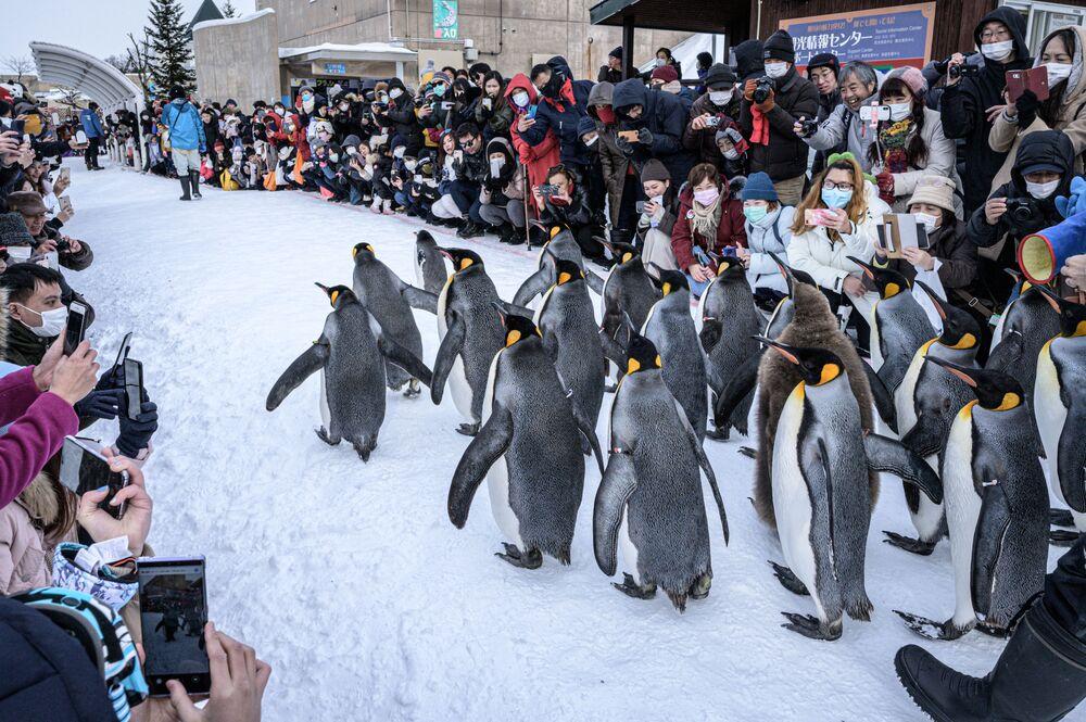 Tučňáci patagonští si užívají sněhu v ZOO v japonském městě Asahikawa na ostrově Hokkaidó