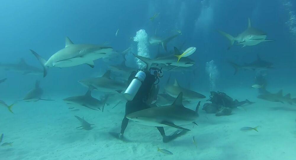 Desítky hladových žraloků obklíčily potápěče na Bahamách