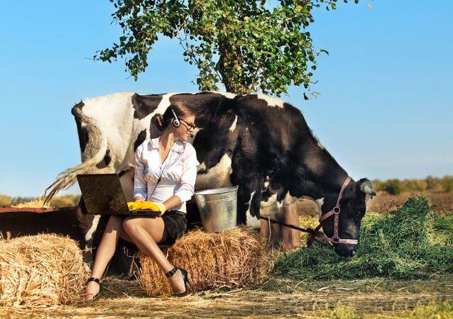 Dívka s počítačem sedí vedle krávy