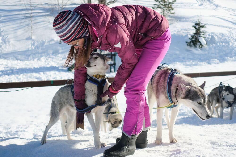 Instruktor připravuje psí spřežení v turistickém komplexu Lago-Naki Kavkazské státní přírodní biosférické rezervace