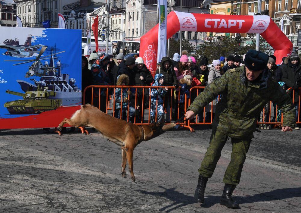 Kynolog spolu se svým psem na jedné z akcí uspořádané při příležitosti oslav Dne obránce vlasti ve Vladivostoku.