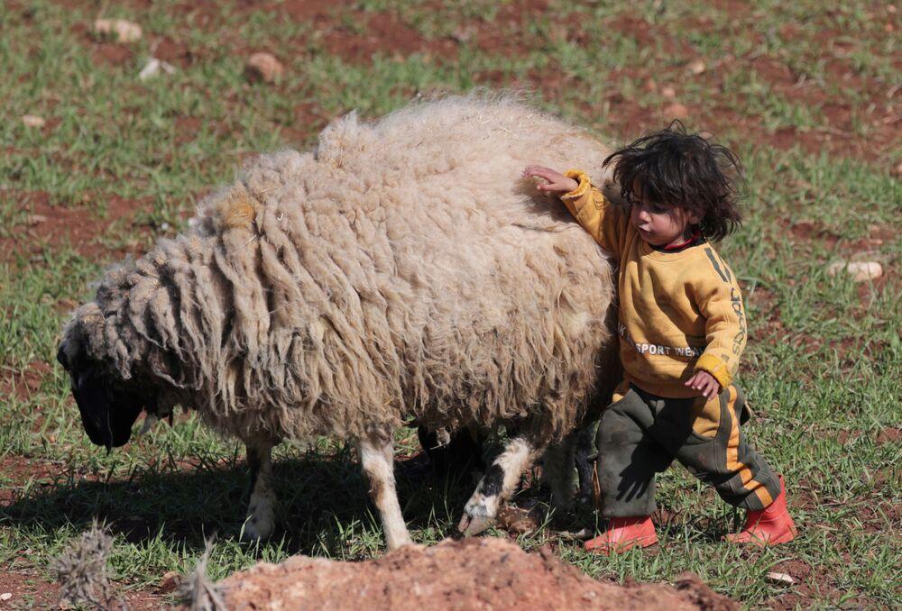 Vnitřně přesídlené dítě v Sýrii si hraje s ovcí