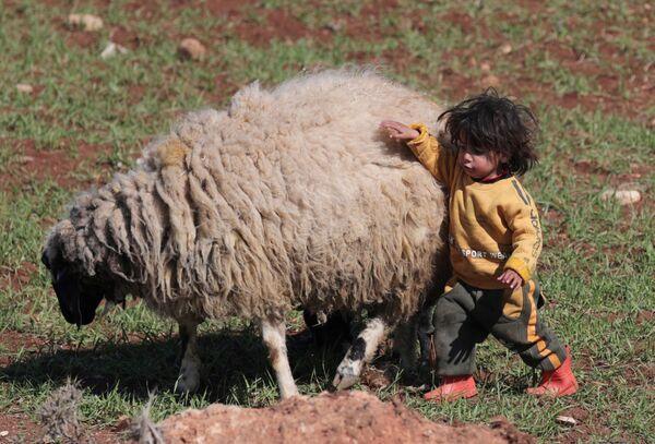 Vnitřně přesídlené dítě v Sýrii si hraje s ovcí - Sputnik Česká republika