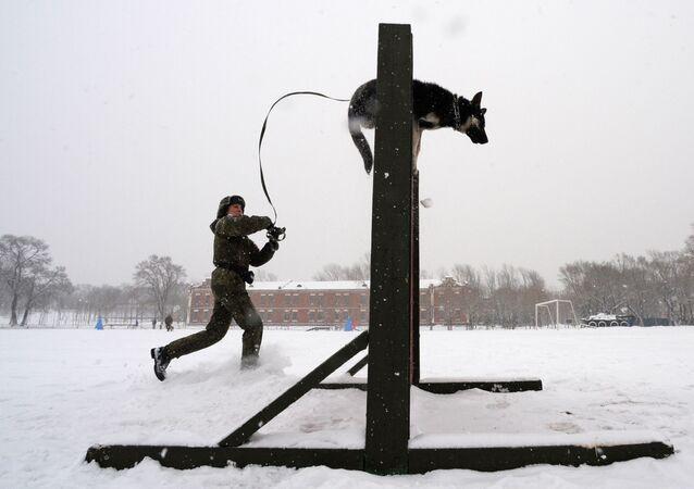 """Kynolog se psem během soutěže vojenských kynologů """"Věrný přítel"""" v Ussurijsku, Rusko."""