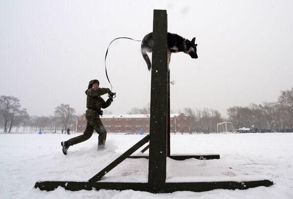 Kynolog se psem překonávají překážku. Soutěž vojenských kynologů Věrný přítel v Ussurijsku, Rusko. - Sputnik Česká republika