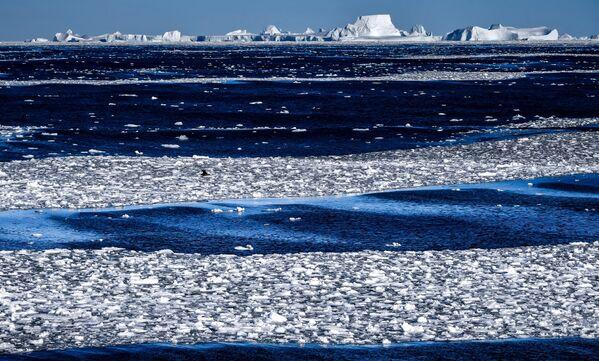 Pohled na Wilkinsův ledový šelf z lodi Admiral Vladimirskij  během plavby na antarktickou stanici Bellingshausen  - Sputnik Česká republika