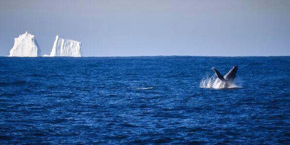 Keporkak poblíž ostrova Adelaide během plavby na antarktickou stanici Bellingshausen - Sputnik Česká republika