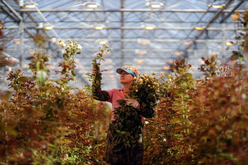 Zahradní skleník v Adygejské republice na jihu Ruska