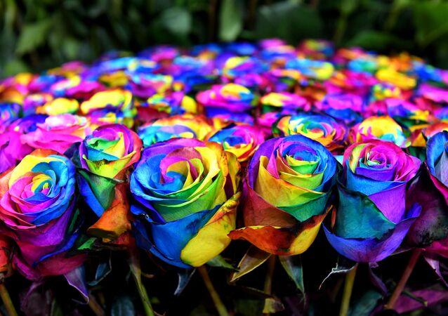 Vícebarevné růže
