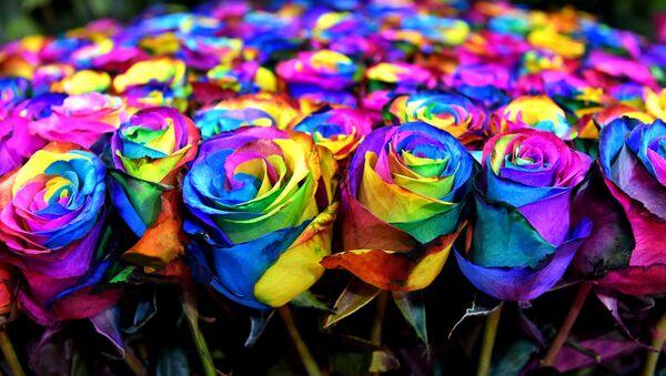 Vícebarevné růže - Sputnik Česká republika