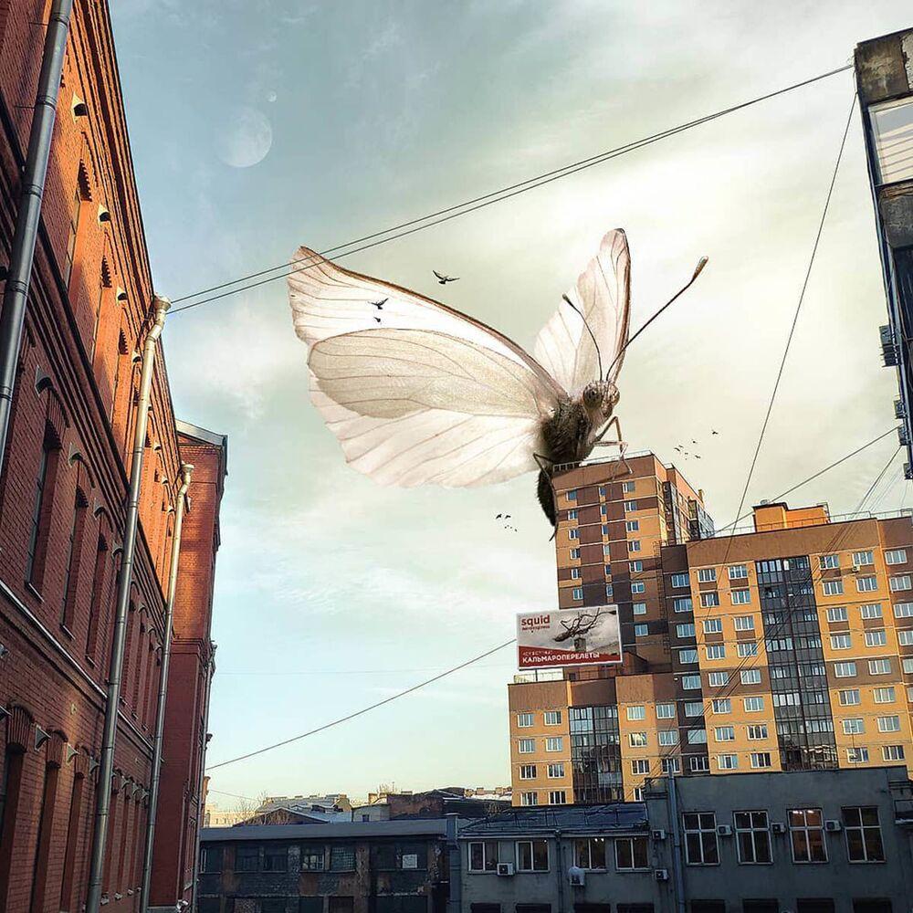 Umělecké pojetí fotografie Vadima Solovjeva: Obrovský motýl na obytné budově