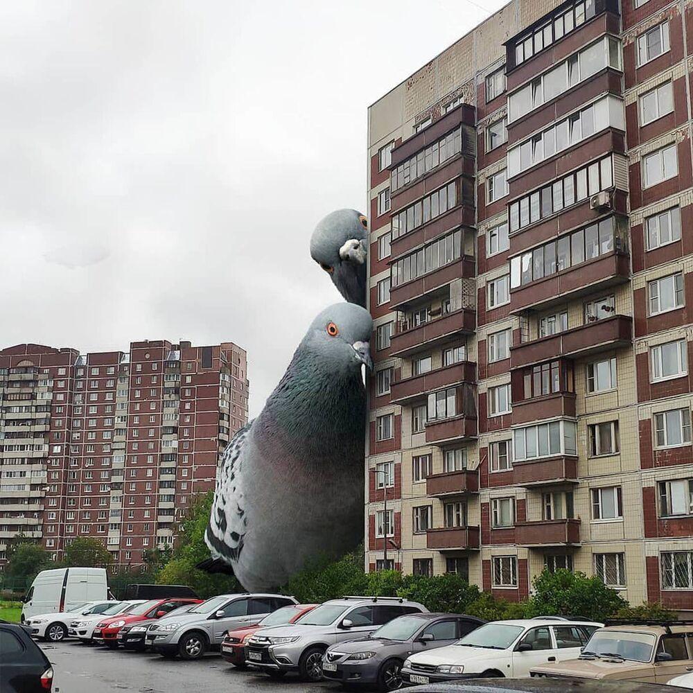 Umělecké pojetí fotografie Vadima Solovjeva: Obří holubi u obytné budovy