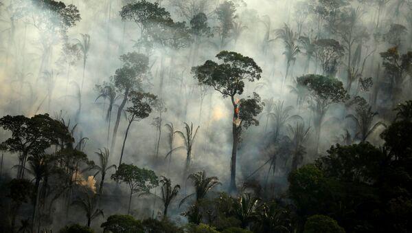 Požáry v lesích Amazonie - Sputnik Česká republika