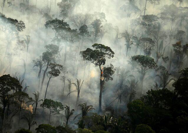 Požáry v lesích Amazonie