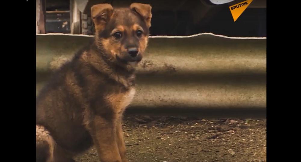 Stavitelé Krymského mostu pomohli toulavým psům, kteří s nimi byli během celé stavby