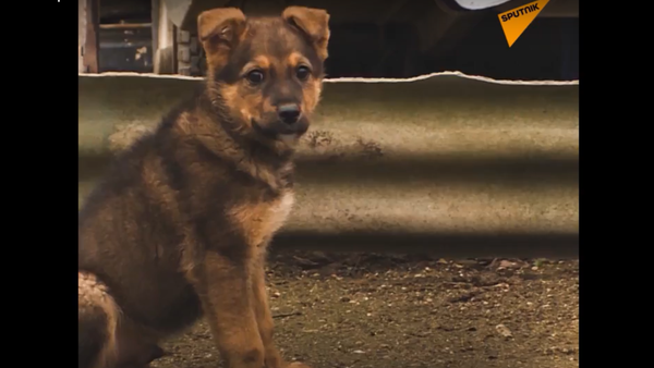 Stavitelé Krymského mostu pomohli toulavým psům, kteří s nimi byli během celé stavby - Sputnik Česká republika