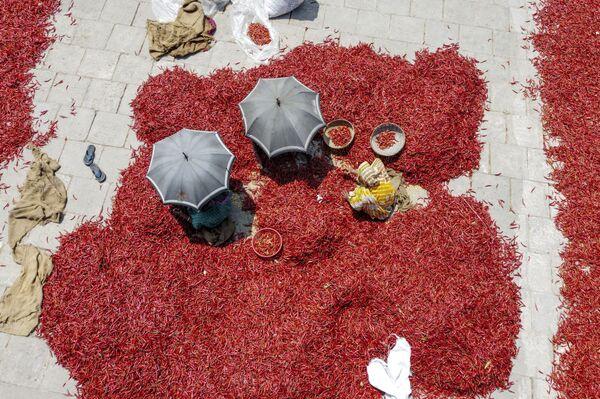 Dělníci suší červené chilli papričky na nábřeží řeky Jamuny, Bangladéš, 17. března 2020 - Sputnik Česká republika