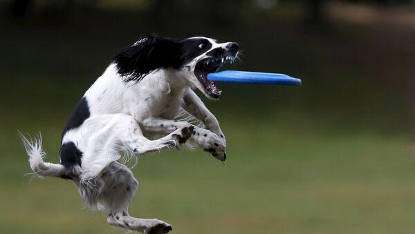 Pes na soutěži ve frisbee v Moskvě. - Sputnik Česká republika
