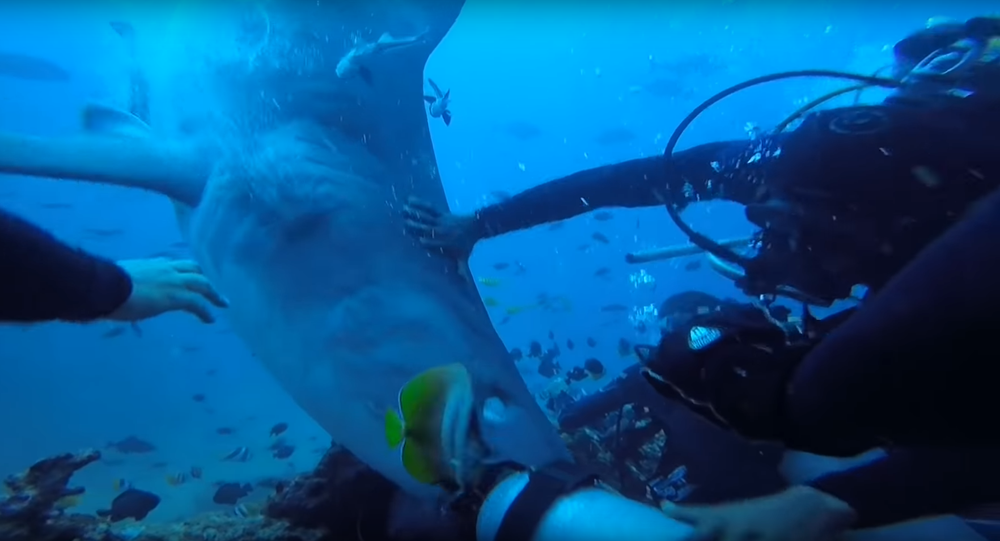 Na internetu se objevilo video, jak žralok kousl do hlavy potápěče