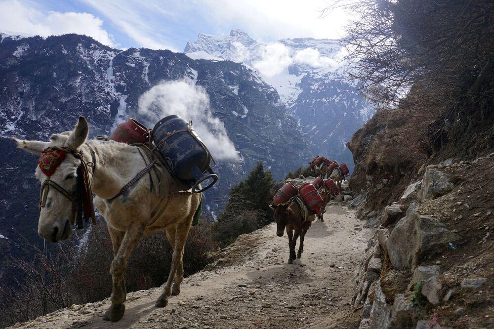 Muly nesou prázdné plynové lahve během preventivních opatření proti koronaviru COVID-19, Nepál