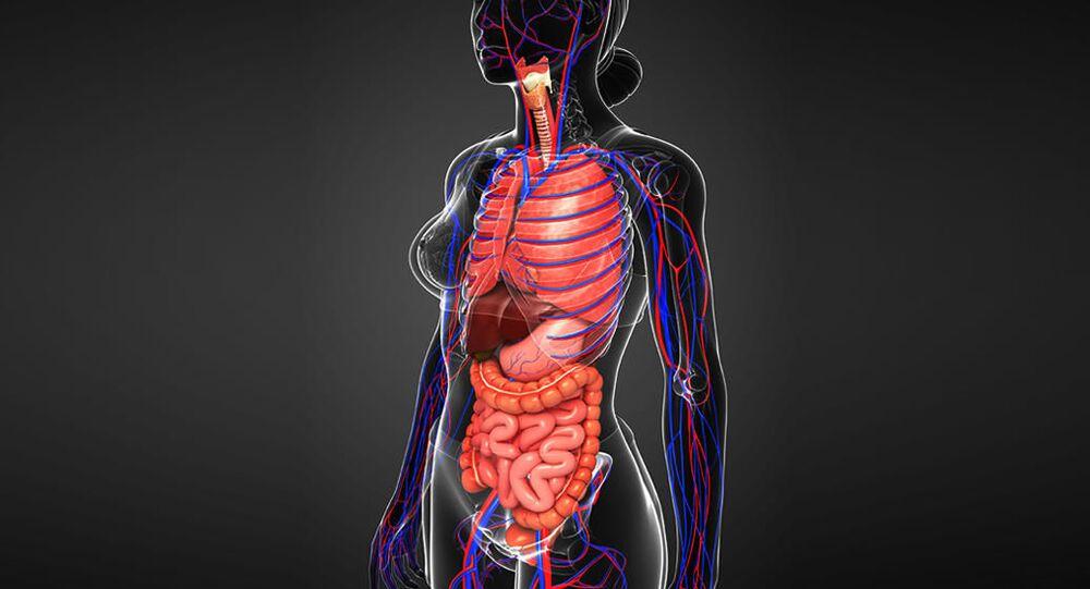 Anatomický obraz člověka