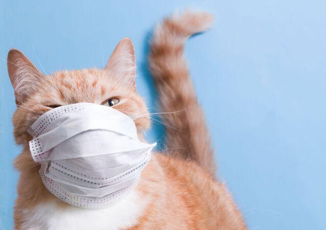Kočka v roušce. Ilustrační foto