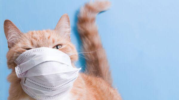 Kočka v roušce. Ilustrační foto - Sputnik Česká republika